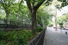 tompkins square park tree by neatnessdotcom, on Flickr