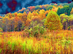 Tree Out Standing in its Field (CountryDreaming) Tags: autumn trees ohio sky painterly color tree fall colors field photoshop 500v20f manipulation fields hockinghills 1000v40f specland abigfave excellentscenic