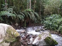 PICT0103 (randall_how) Tags: trail panama quetzals