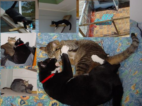 Our cats in Sydney 2002