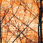 Brick and Tree Reflections