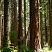 As Florestas Nacionais são terras públicas