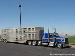 McGinn Bros. Peterbilt 389 (Michael Cereghino (Avsfan118)) Tags: tractor truck wagon cattle brothers bull semi pete heavy bros livestock trucking sleeper peterbilt haul 389 hauler mcginn bullwagon haulers