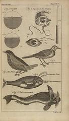 Anglų lietuvių žodynas. Žodis unicorn-fish reiškia n zool. vien(a)ragis, narvalas lietuviškai.
