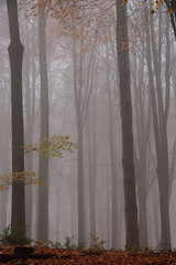 Yorkshire Trees in a Fog (fotopraxis) Tags: trees fog nikon zoom yorkshire sigma 18250 d7200