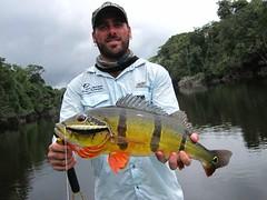 Amazonia 2012 (41)