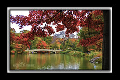 Central Park_8537M (mikeyasp) Tags: bridge autumn trees lake newyork color leaves reflections landscape colorful centralpark framed scenic mat