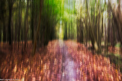 Into the Light (Neil_Leighton) Tags: autumn trees colour tree green art fall leaves woodland landscape sussex nationalpark brighton colours places eastsussex southdowns icm flowersplants stanmerpark intentionalcameramovement otherkeywords sussexcountryside