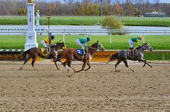 "2015-11-11 (65) r6 Xavier Perez on #15 More Stormyweather (JLeeFleenor) Tags: photos photography md marylandracing marylandhorseracing laurelpark jockey جُوكِي ""赛马骑师"" jinete ""競馬騎手"" dżokej jocheu คนขี่ม้าแข่ง jóquei žokej kilparatsastaja rennreiter fantino ""경마 기수"" жокей jokey người horses thoroughbreds equine equestrian cheval cavalo cavallo cavall caballo pferd paard perd hevonen hest hestur cal kon konj beygir capall ceffyl cuddy yarraman faras alogo soos kuda uma pfeerd koin حصان кон 马 häst άλογο סוס घोड़ा 馬 koń лошадь maryland"