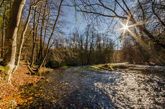 The end of Autumn (hjuengst) Tags: november autumn sun color fall colors leaves forest river woods colorful laub herbst foliage colourful starnberg fluss wald sunbeam sonnenstrahlen gauting würmtal herbstfarben nikond7000