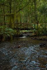 Wet Feet (damdiv) Tags: moss rainforest victoria stack oldmansbeard
