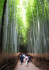 Arashiyama Bamboo Grove (samikahkonen) Tags: japan japanese woods kyoto peace bamboo arashiyama kimono japanlife