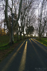 Parque de Artaza (Mimadeo) Tags: park trees sunlight tree landscape outdoors spain path nobody euskadi basquecountry paisvasco leioa artaza