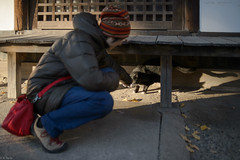 in the winter afternoon sunlight (kasa51) Tags: winter people sunlight cat shrine afternoon
