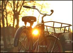Sunset Cruiser (tonywheels) Tags: sunset cruiser beachcruiser bicycle custombike vélo bicyclette sun light winter