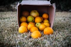 Day 119 (inbar_stern) Tags: orange oranges yellow nature fruit food tasty box 365 365daysproject 365dayschallenge 365challenge 365project 365days