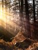Sonnenwald (st.weber71) Tags: wald sonne sonnenstrahlen licht natur outdoor panasonic gx8 niederrhein