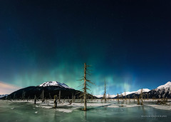 Dead Forest (Traylor Photography) Tags: alaska girdwood northernlights latenight winter stars mountains portage panorama snow trees marsh wood forest anchorage frozen sewardhighway deadforest distant ice swamp constellation unitedstates us