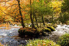 Remember autumn colour? (Keith in Exeter) Tags: autumn colour riverteign woodland island dartmoor nationalpark landscape water stream moss sedge leaves foliage yellow orange green outdoor woodlands