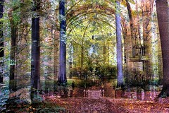 kerkebos (roberke) Tags: photomontage photoshop layers lagen textures textuur bos bomen trees creatief creation surreal