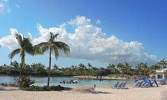Bahamas (Paradise Island) Dolphin Cay offers swimming with playful bottlenose dolphines