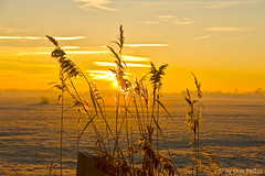 de-ochtendstond-heeft . . . . (Don Pedro de Carrion de los Condes !) Tags: donpedro d700 winter winters riet pluimen zonsopgang putten putterpolder zeedijk randmeer veluwe recreatie koud fis schoonheid natuur weiland