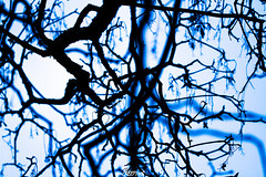 (CREE PING) Tags: blue bleu branches arbres bretagne breizh bzh blanc canon canon7d creeping ciel couleurs ombres 1740mml france french floral