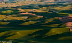 _APW3866.jpg (p.watanabe1226) Tags: palousewa rbarbeeworkshop steptoebutte rollinghills landscape wheatfields