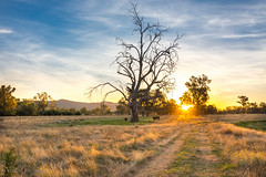 Outback Sunset (nickloadsman) Tags: australia country outback landscape sunset new south wales nsw albury wodonga victoria tree sun sky colour hdr nikon d7200 mountain range bright murray river basin beautiful photography land scape countryside cloud sydney melbourne canberra