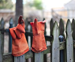 Out to dry (dr_scholz@ymail.com) Tags: cityscape gloves orange outdoors fence wideopen backyard leicam9 summicron summicron50mmf20 summicronm