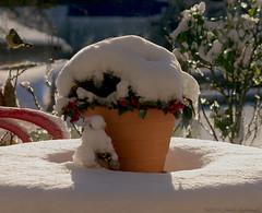 Winter (Natali Antonovich) Tags: winter christmasholidays christmas snow frost nature tervuren belgium belgique belgie lifestyle