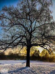 Winter Wonderland #winter#photography#schön #hochrhein#blackforrest#badsäckingen #tree#sun#landscape#panorama#backround#Fotografie (marc.finzer) Tags: sunset winter photography schön hochrhein blackforrest badsäckingen tree sun landscape panorama backround fotografie