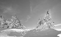 Baqueira 27 (Eloy Rodríguez (+ 5.300.000 views)) Tags: baqueira nautaran salardú nieve snow neige alud aludes aludesdenieve avalanche quitanieves carretera invierno winter hiver winterscape paisaje landscape esqui ski skiing nature baqueiraberet pladeberet beret valdearan valdaran valledearán valderuda bonaigua puertobonaigua argulls viehlla lleida cataluña catalunya españa spain valldaran lavalldaran xmas christmas merrychristmas happynewyear airelibre borda arbol sol cielo cieloazul blancoynegro monocromo eloy rodriguez potd:country=es