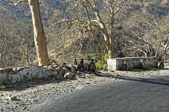 _DSC2476_DxO (Alexandre Dolique) Tags: d810 inde udaipur rajasthan singe monkey attaque attack india