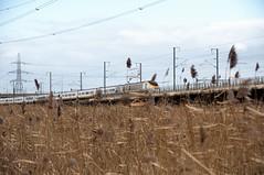Eurostar (Common Buzzard) Tags: rspb rainham essex train railway viaduct eurostar