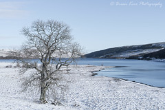 Winter On St Mary's Loch (.Brian Kerr Photography.) Tags: stmarysloch scotland scottishlandscapes moffat selkirk tree snow winter coldmorning frosty loch mountains outdoorphotography sonyuk a7rii briankerrphotography briankerrphoto wwwbriankerrphotographycom scottishborders frost photography landscapephotography
