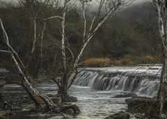 See the Dew? (keith_shuley) Tags: dew fog figgy moisture moist water mist rain austin bullcreek winter texas olympus