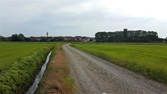Via Francigena - Vercelli - Robbio