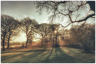 Sun Amongst The Trees