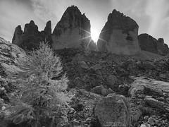 Tre cime in autunno N°8 Mono (Bernhard_Thum) Tags: bernhardthum thum dreizinnen trecime autumn alps h5d60 hcd4824 nature eli capturenature landscapesdreams elitephotography