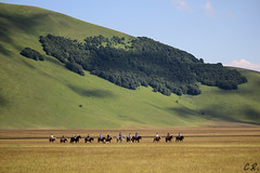 Carovana (pandellescimmie) Tags: horses italy italia perugia cavalli umbria norcia castelluccio castellucciodinorcia