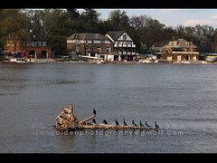 "Series: ""Cormorants on the Schuylkill"" 11 - Philadelphia, PA (2015). (lynngoldenphotography) Tags: sunset water river cormorants wings outdoor wildlife flock birding preening row driftwood boathouse boathouserow goldenhour schuylkill kellydrive"