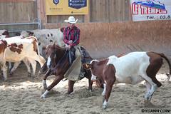 BJ1A9138 (yoann.coin) Tags: horse france western cutting equitation ncha remoray