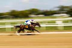 Horse Racing-9244 (wcmunder) Tags: horseracing belmontpark longislandphotographymeetup
