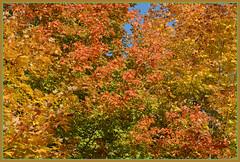 *** Autumn Color Splash ~ I. *** (Wolverine09J ~ 1 Million + Views) Tags: autumnfoliage nature landscape friendsforever colorsofautumn spiritofphotography level1autofocus level2autofocus niceasitgets~level1 rainbowofnaturelevel1red musictomyeyes~l1 elmcreekfall