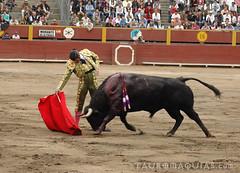 Derechazo de Morante en Lima (Vladimir Tern A.) Tags: peru gente lima bulls toros costumbres acho bullfighting bullfighters tauromaquia tradiciones toreros matadores corridasdetoros taurinos plazasdetoros feriataurina culturayarte