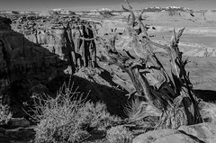 the henry mountains (paul noble photography) Tags: blackandwhite mountains monochrome landscape utah blackwhite flickr wideangle explore canyonlandsnationalpark moab southernutah blackandwhitephotography americansouthwest freelancephotographer 2470f28 flickrexplore deserttree henrymountains photosinexplore nikon2470mmf28 d7000 paulnobleimages paulnoblephotography