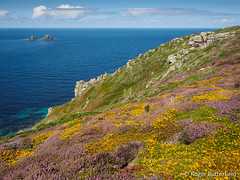 Maritime Heath (Roger B.) Tags: cornwall unitedkingdom heather heath heathland gorse stjust gbr brisons maritimeheath