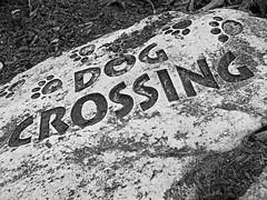 Dog Crossing (MTSOfan) Tags: garden fun footprints ornament pointandshoot greyscale dogcrossing