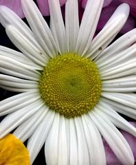 56959.11 flowers (horticultural art) Tags: flowers horticulturalart